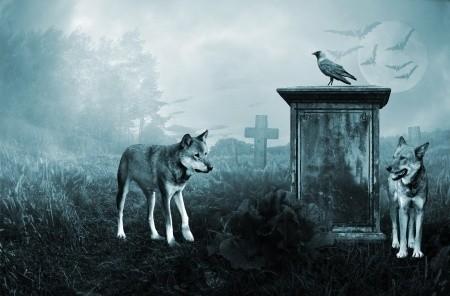 animal-spirits